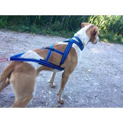 Harnais X-back Troll pour chien long
